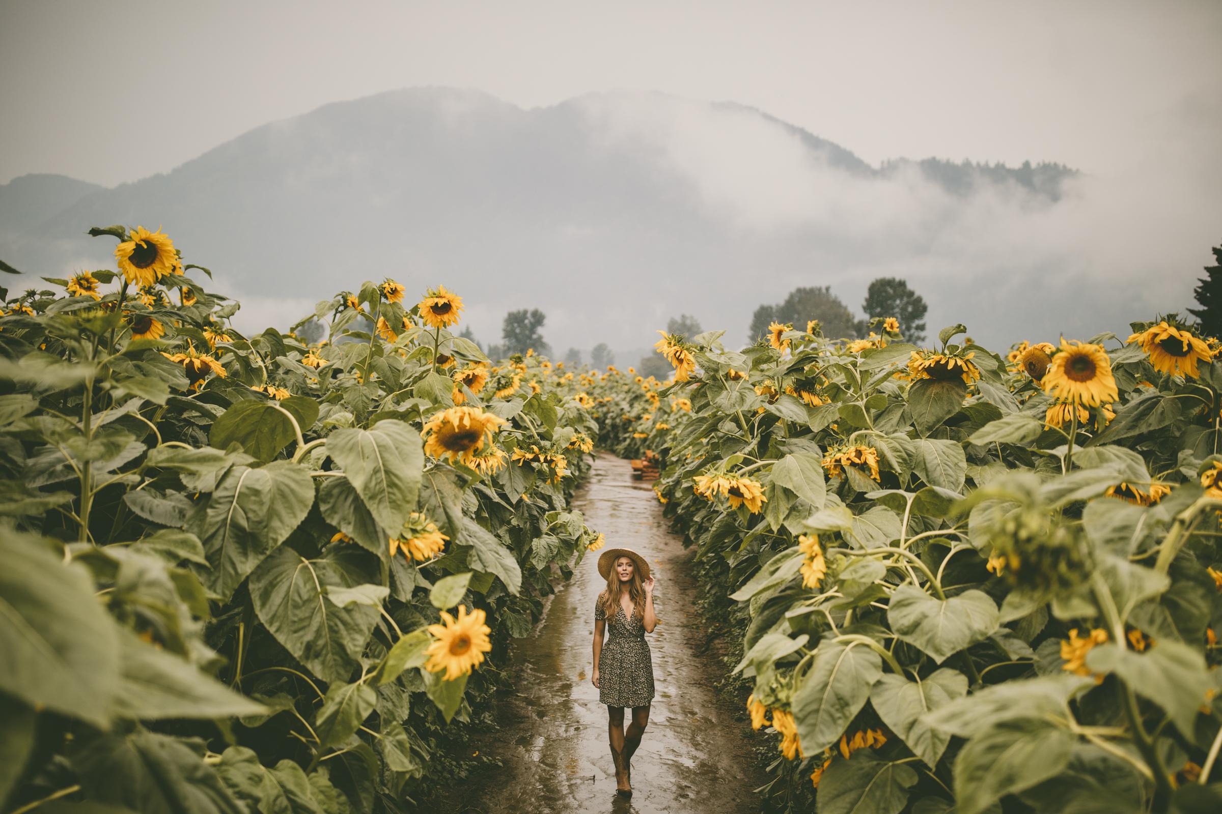 15. ...Sunflower garden advise