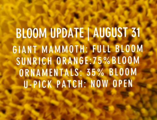 BLOOM UPDATE: AUGUST 31ST