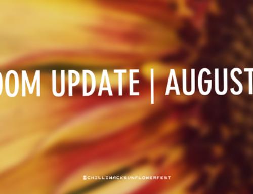 Bloom Update:
