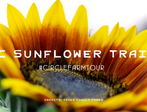 Follow the BC Sunflower Trail