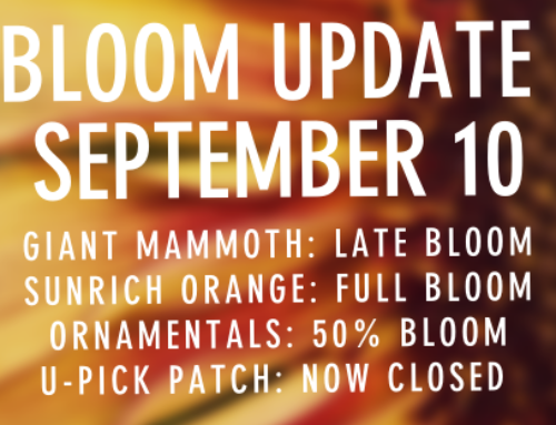 BLOOM UPDATE SEPTEMBER 10TH