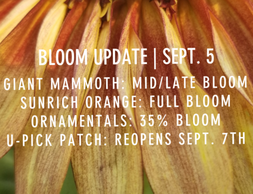BLOOM UPDATE: SEPTEMBER 5TH