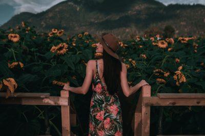 The Fraser Valley Sunflower Trail - Chilliwack Sunflower Festival