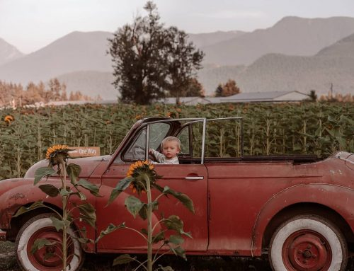 10 Photos from the 2020 Chilliwack Sunflower Experience